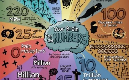 Nuestro cerebro en 8 cifras y una infografía