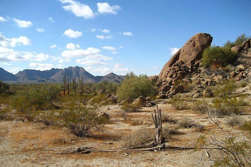 Así es como nacen estos cactus dulces que se convierten en caramelos en el desierto de Sonora