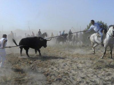 Lo que la prohibición de matar al Toro de la Vega supone, en 9 cifras