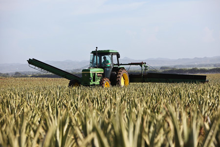 El campo está lleno de tractores de 40 años. Para los agricultores, siguen siendo más eficientes