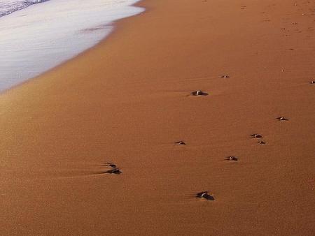 Arena de la playa como materia prima de baterías con una duración tres veces superior a la actual