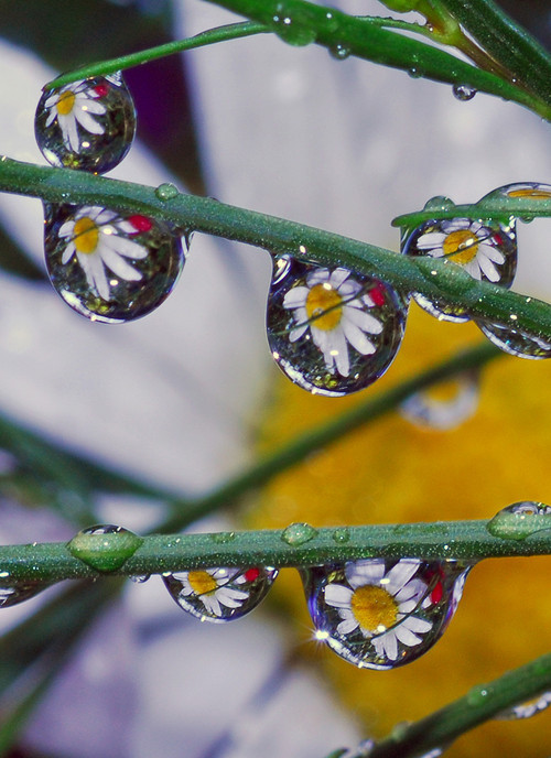 Foto de La belleza de una gota de agua (23/25)