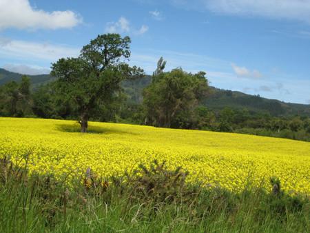 Biodiesel Campo Cultivo