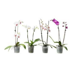 Las orquídeas: elegancia y fragilidad
