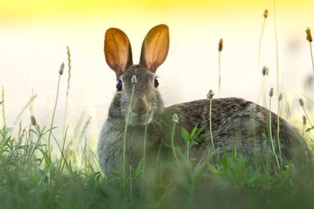 """España, tierra de conejos (amenazados): la especie ha pasado de """"plaga"""" a estar en peligro"""