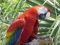 Singularidades extraordinarias de animales ordinarios (XXXIII): el loro
