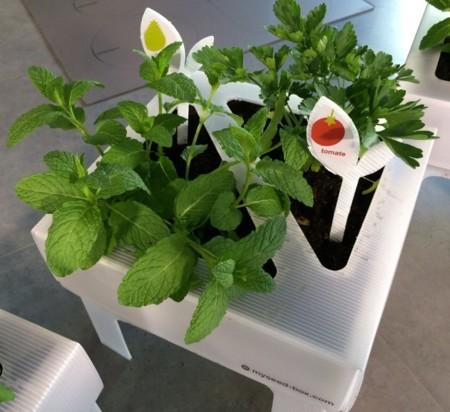 Monta el huerto en tu propia cocina con seed box for Monta tu cocina