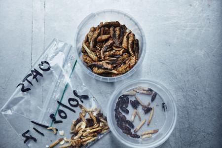 insectos utilizados en Ikea