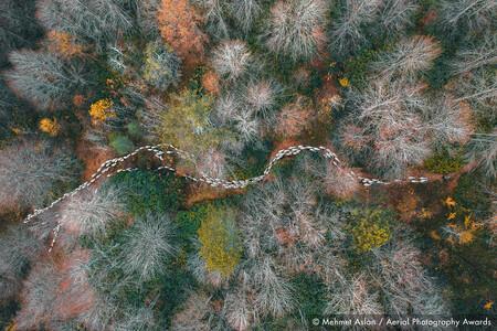 Forest Path Mehmet Aslan Aerial Photography Awards