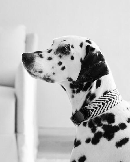 Zara Home Mascotas 1