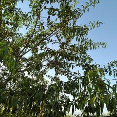 Foto 5 de 34 de la galería fotos-con-el-asus-zenfone-ar en Xataka
