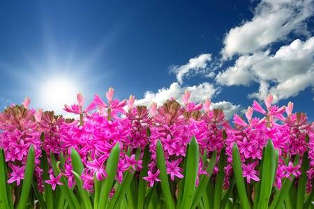 Compañeros de ruta: disfrutando del aire libre de la primavera