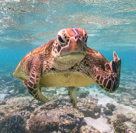La 'peineta' que una tortuga le hace a un fotógrafo es la imagen ganadora del Comedy Wildlife Photography Awards 2020