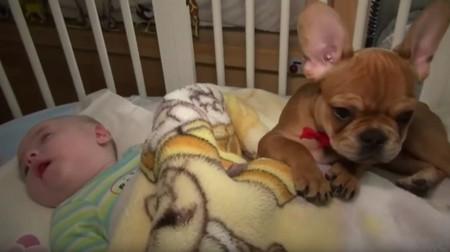 Havana, la perrita que cuida de los niños enfermos en un hospicio de Polonia