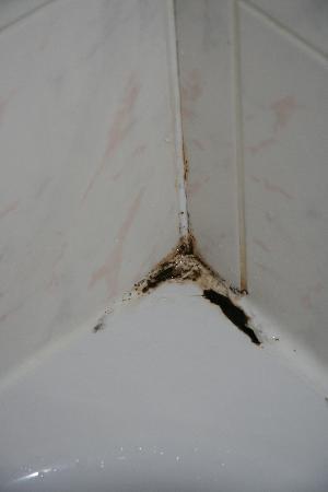 Puesta a punto: Eliminar el moho de la pared