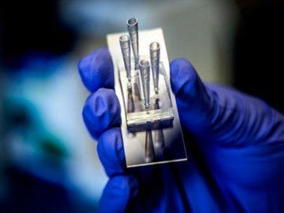 Este microchip simula un riñón y evita que los fármacos provoquen efectos no deseados