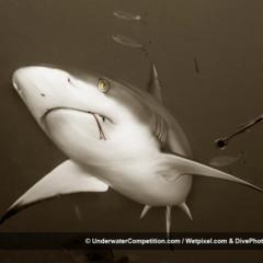Foto 4 de 34 de la galería underwater-competition en Xataka Foto