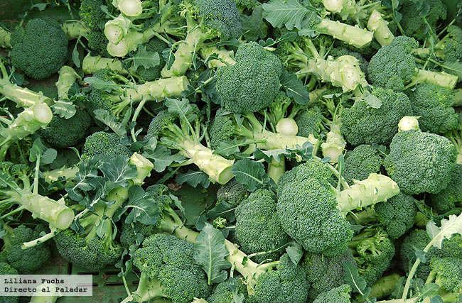 Brócoli recién cosechado