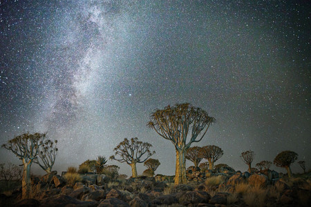 Diamond Nights Beth Moon 1
