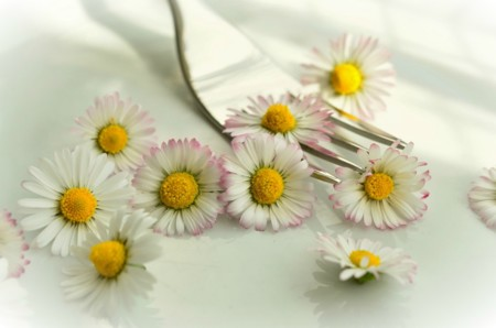Guía rápida de las flores comestibles de la A a la Z