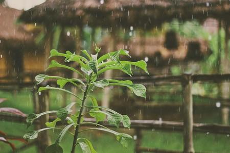 """Las plantas """"sienten"""" algo muy parecido al pánico cuando se enfrentan a uno de sus peores enemigos: la lluvia"""
