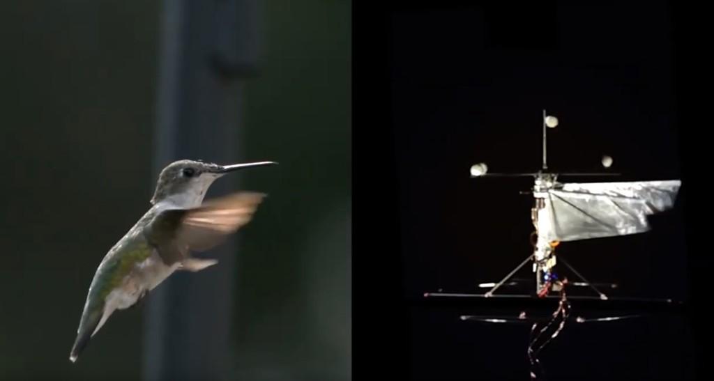 Este robot-colibrí usa la inteligencia artificial para acudir allí adonde los drones no pueden