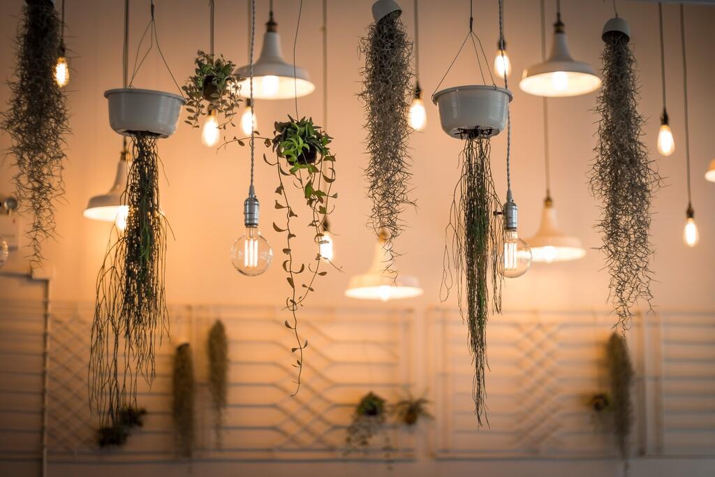Hacer crecer una planta con luz artificial es posible si sabes cómo: la mega-guía de iluminación LED para plantas de interior
