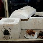 Se encuentran los primeros escarabajos momificados en el Antiguo Egipto