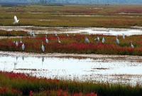 ¿Son las aguas residuales la solución para los humedales?