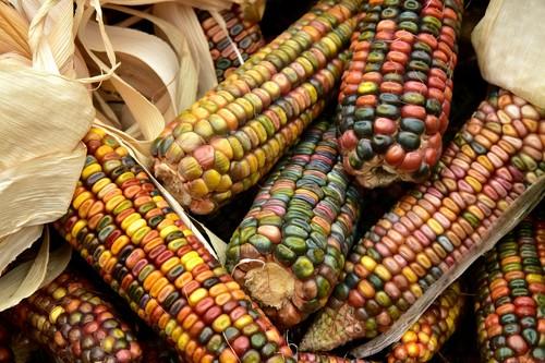 ¿Cómo salvarnos del maíz transgénico? Los campesinos mexicanos tienen la solución