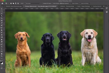 Así es la nueva herramienta de selección de objeto que llegará con Adobe Photoshop CC 2020