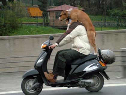 De viaje con el perro a cuestas