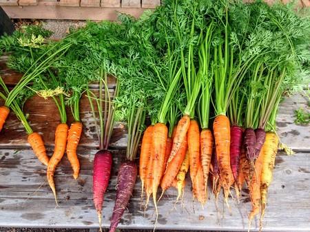 Huerto Organico Zanahorias Casa Frutas Verduras
