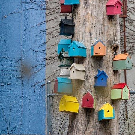 Construir un nido para pajaritos es sencillo