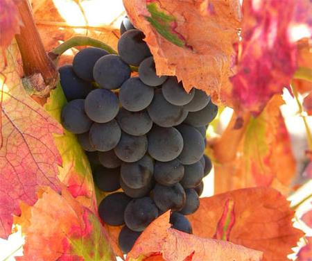 Batido revitalizante e hidratante a base de uvas negras y zanahorias