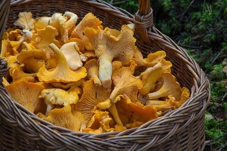 Fungus 1194380 1280