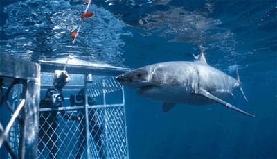 Dive Travel Show, encuentro con tiburones en Madrid