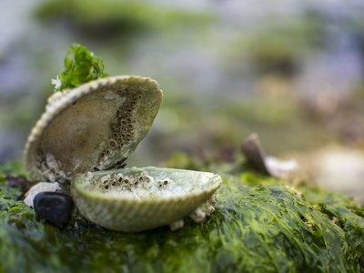 Las almejas y los gusanos oceánicos también liberan gas de efecto invernadero