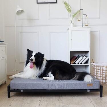 Camas y muebles ideales para perros