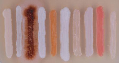 Identificar especies fungi a partir de su código de barras genético