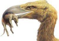 Phorusrhacidae: las aves terribles