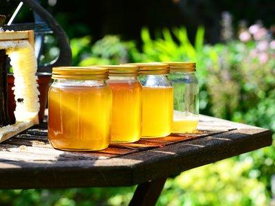 7 beneficios que la miel orgánica le aporta a tu salud