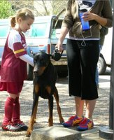 Aprender a convivir con perros (II): comportamientos a evitar para prevenir ataques