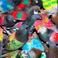Las palomas del fotógrafo Ricardo Cases visitan el Centro de Arte de Alcobendas en Madrid