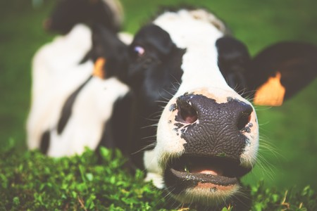 Beber leche cruda es arriesgar tu salud: ¿en qué se diferencia la leche del súper de la leche cruda?
