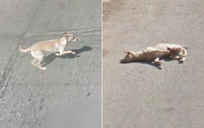 Un coche de Google Street View atropella a un perro en Chile