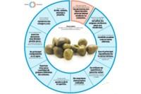 Una completa infografía para conocer mejor las alcaparras