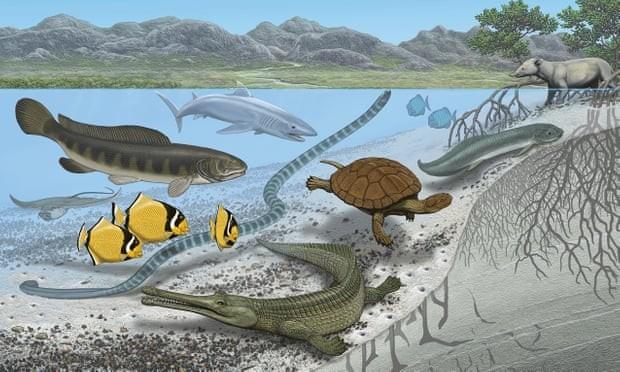 Los animales marinos más grandes del mundo vivieron en el Sahara: el gigantismo evolutivo también se da en el mar