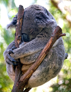 Ubuntu 9.10 Karmic Koala Alpha 1: la rueda está de nuevo en marcha