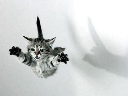 ¿Podría un gato sobrevivir a una caída desde un rascacielos?
